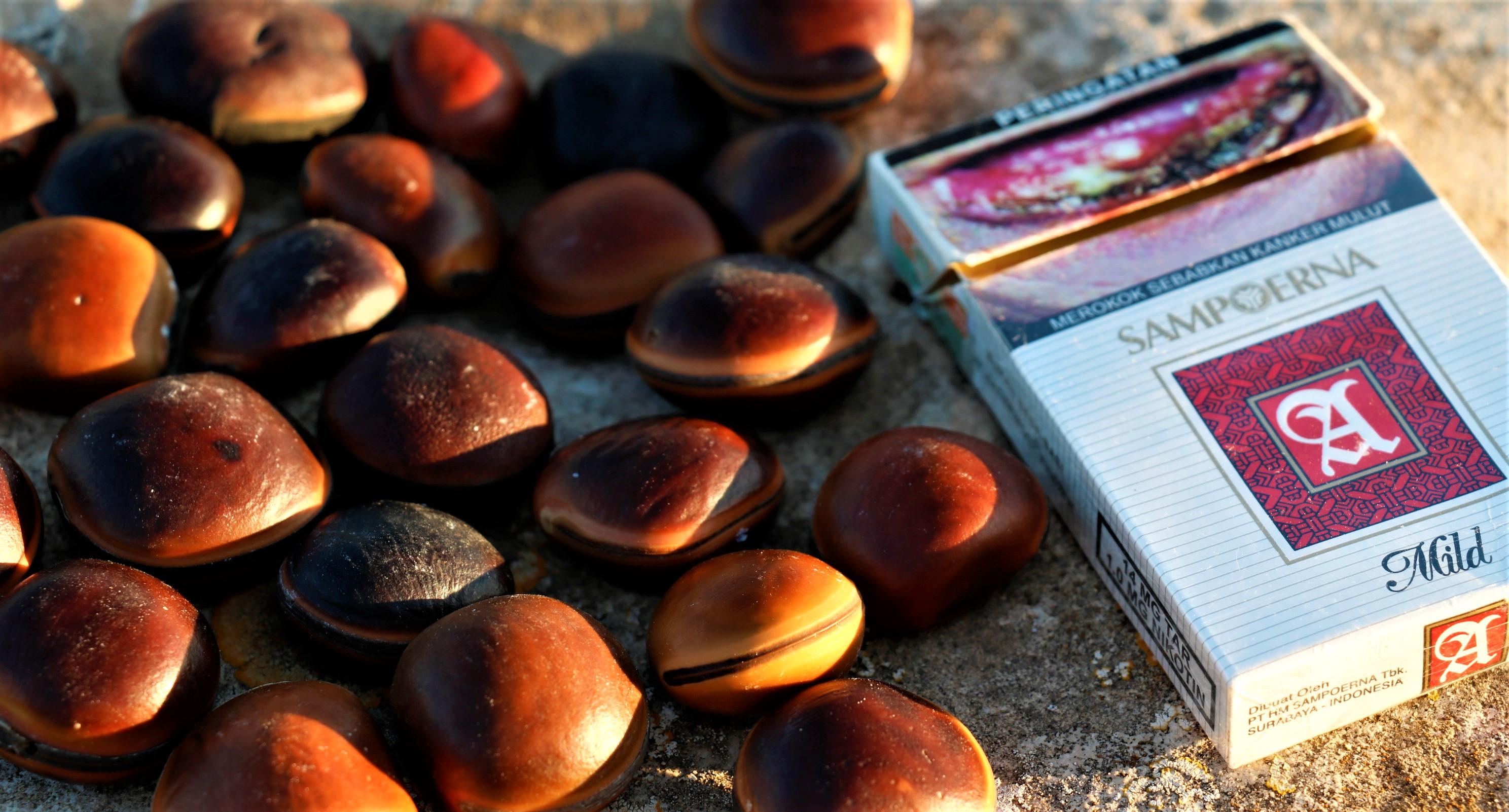 sampoerna tabac clou de girofle indonésie