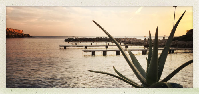 Blogueuse surfeuse, aloe vera, gel, cosmétique surfeuse, beauté, poisson, Méditerranée,