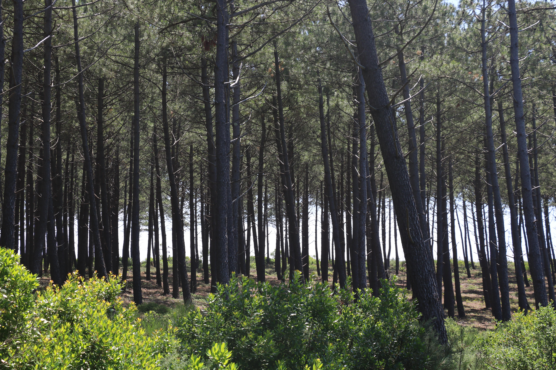 immersion forêt pins landes 33