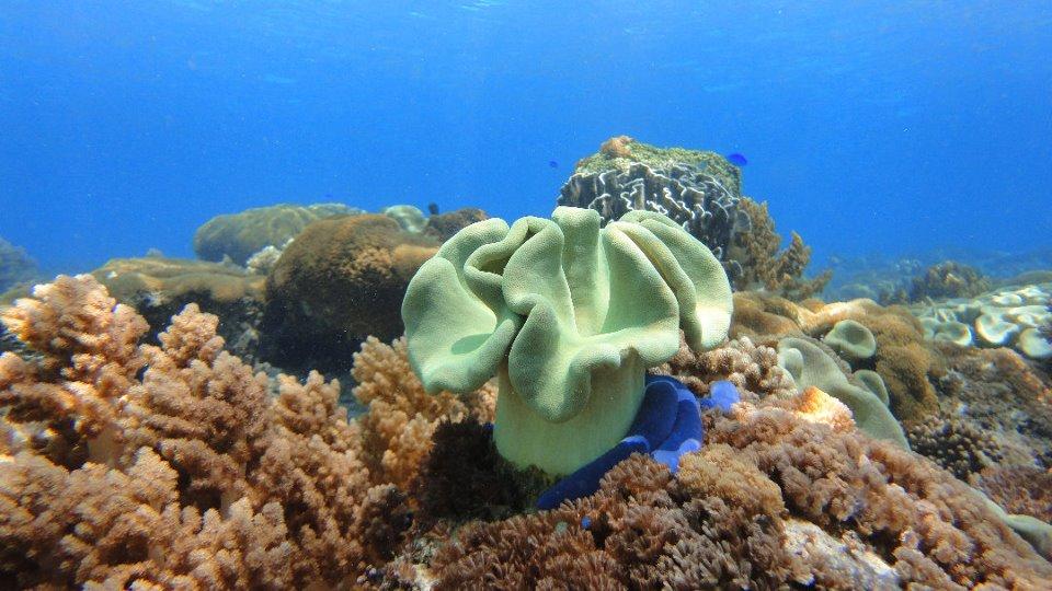 archipel d'Alor snorkelling