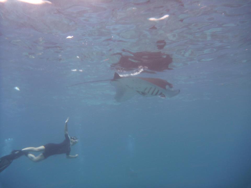 snorkelling raie manta Bali